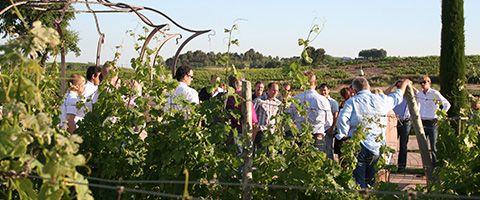 Activities: Wineyards